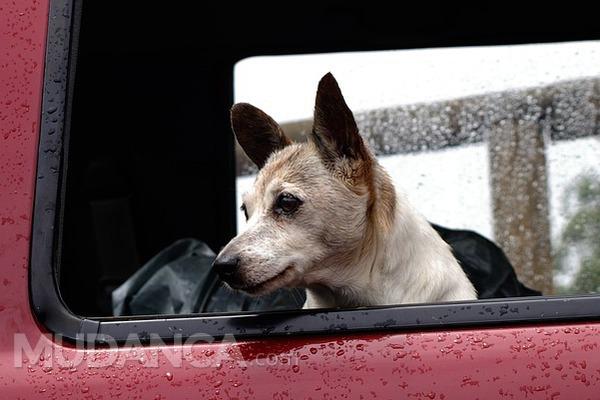 Como deve ser feito o transporte de animais?