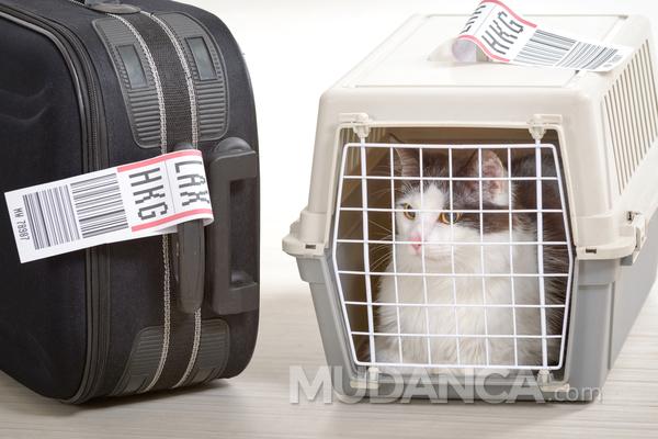 Como transportar animais em mudanças internacionais
